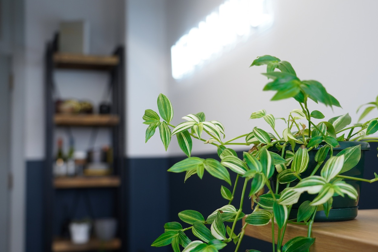 How Not To Kill Your Office Plants