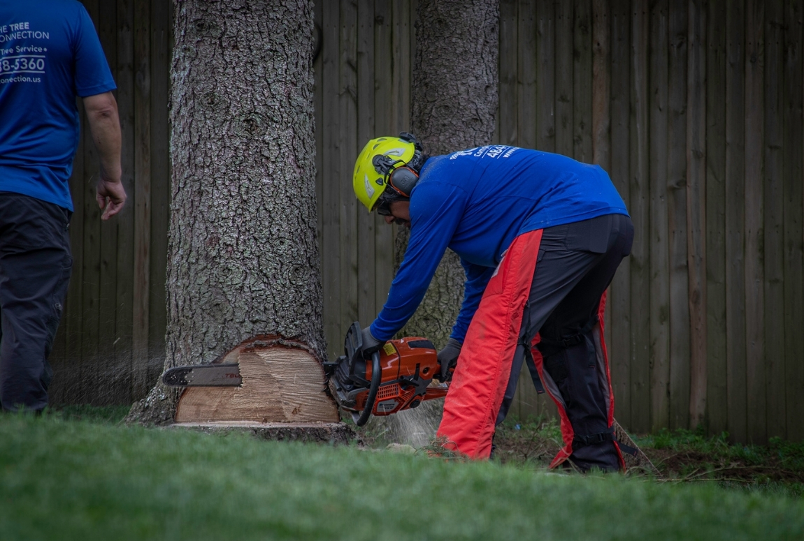 a tree service worker using a chainsaw to cut the bottom of a medium-sized tree