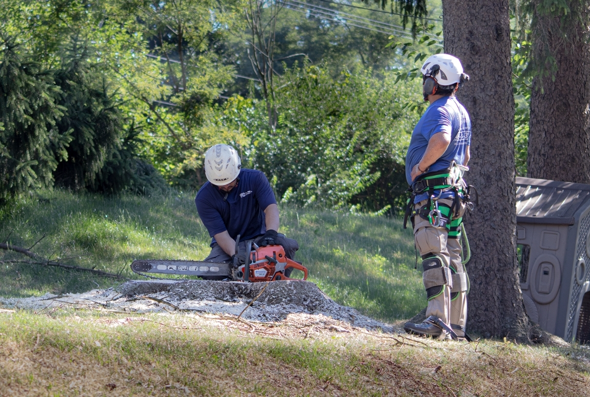 image of a tree worker using a chainsaw to cut a tree stump