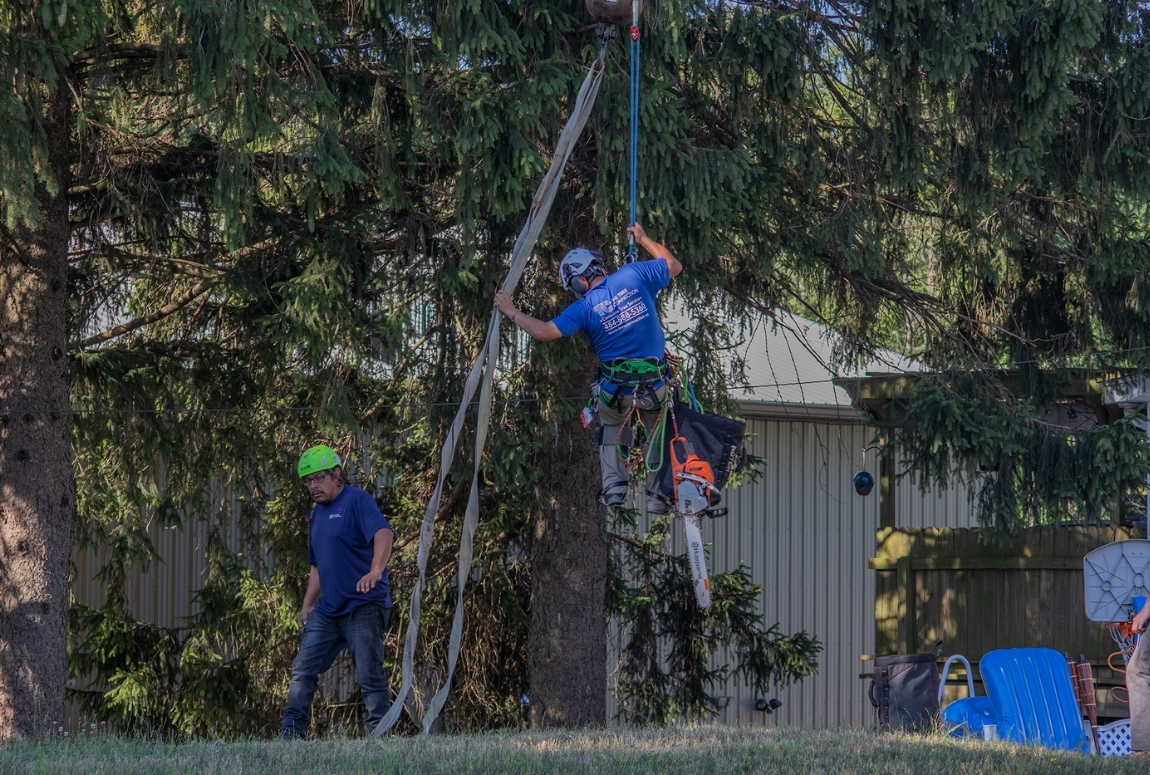 image of a tree climber starting to be hoisted up by a crane