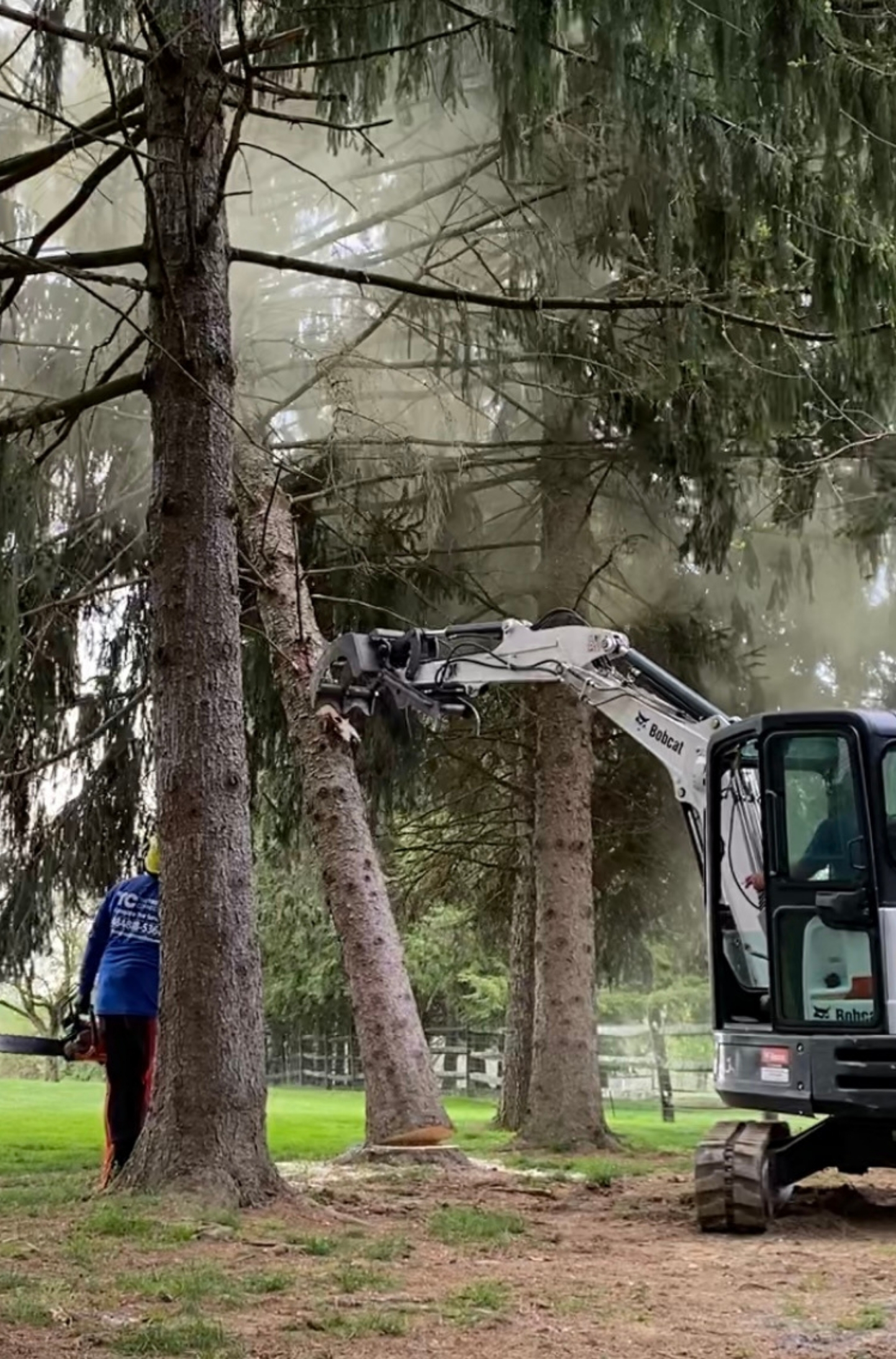 an image of a bobcat machine pushing a cut pine tree down to the ground