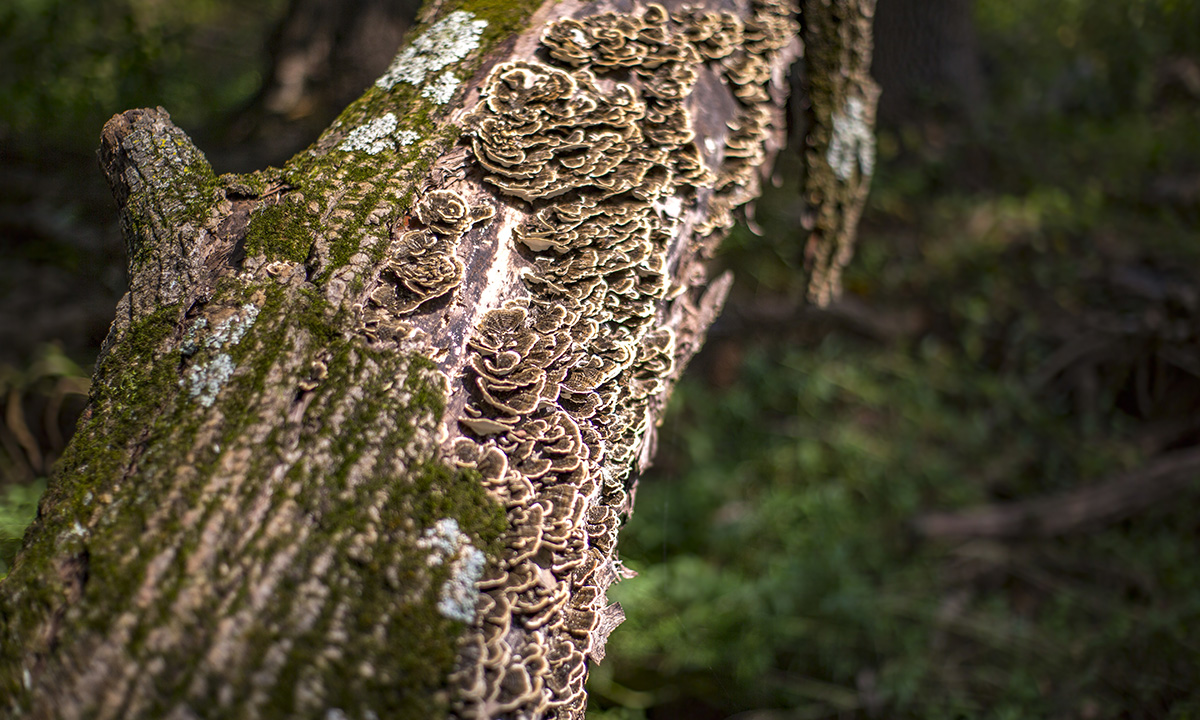 tree with fungus growing on it