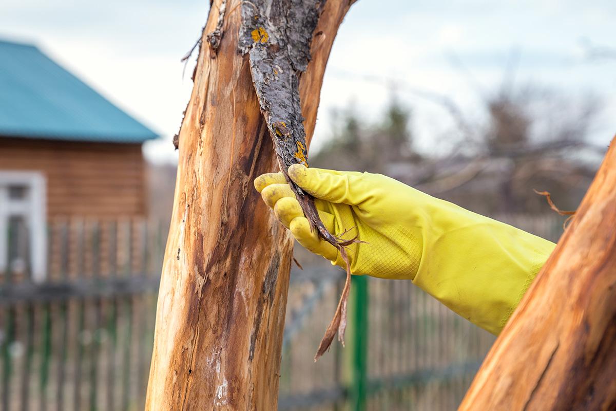 bark peeling off a tree trunk