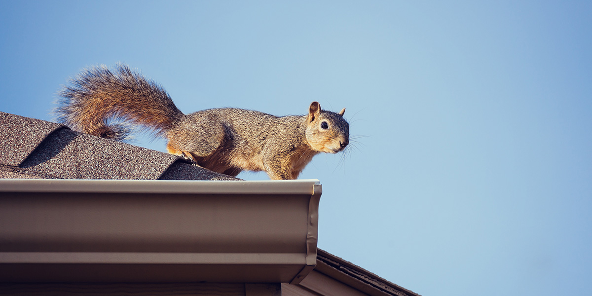 tree branches can lead animals to your roof