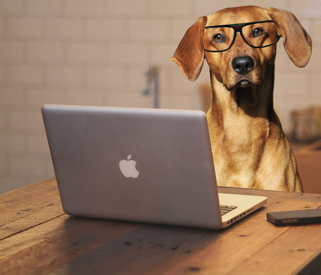 Dog-Friendly Coworking Spaces: Our Top Picks by City!