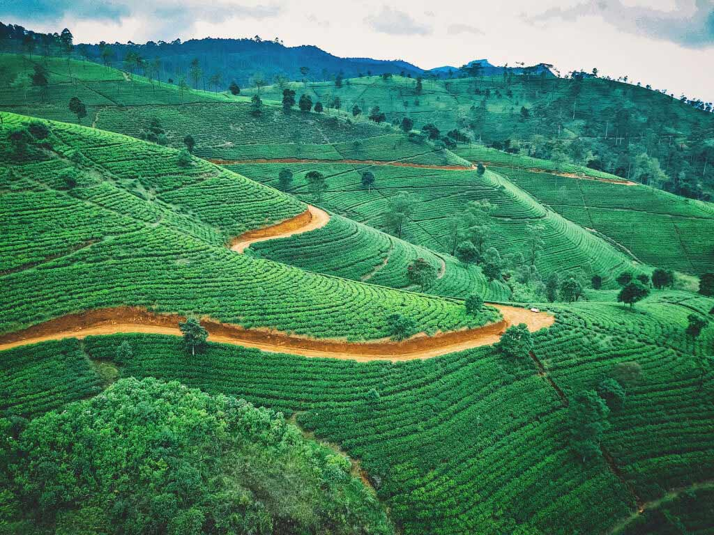 rolling green hills in Sri Lanka