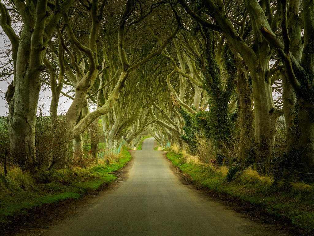 Dark Hedges Ireland Game of Thrones