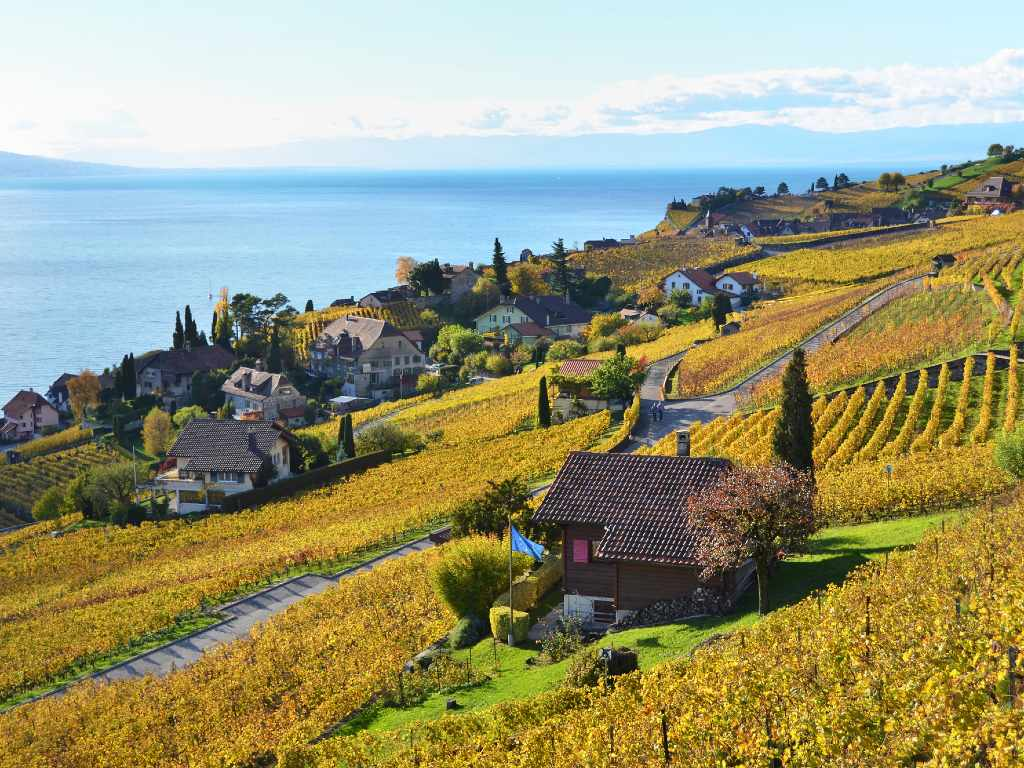 Lavaux vineyards in autumn