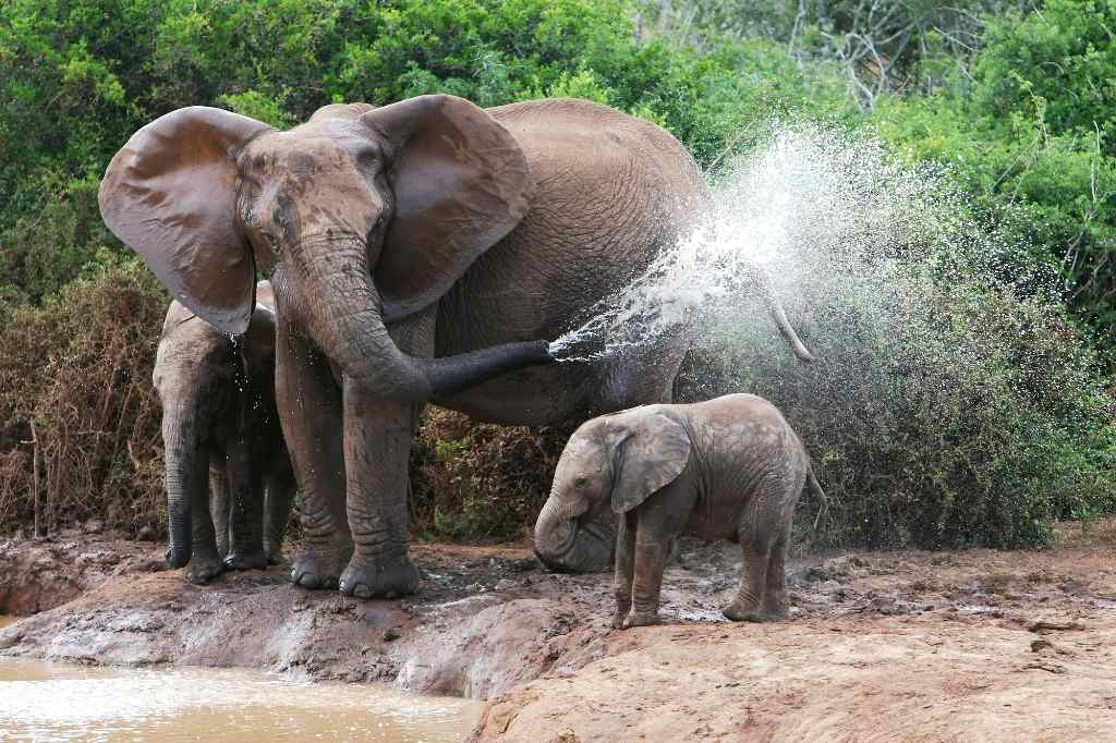 mother and baby elephant playing in water
