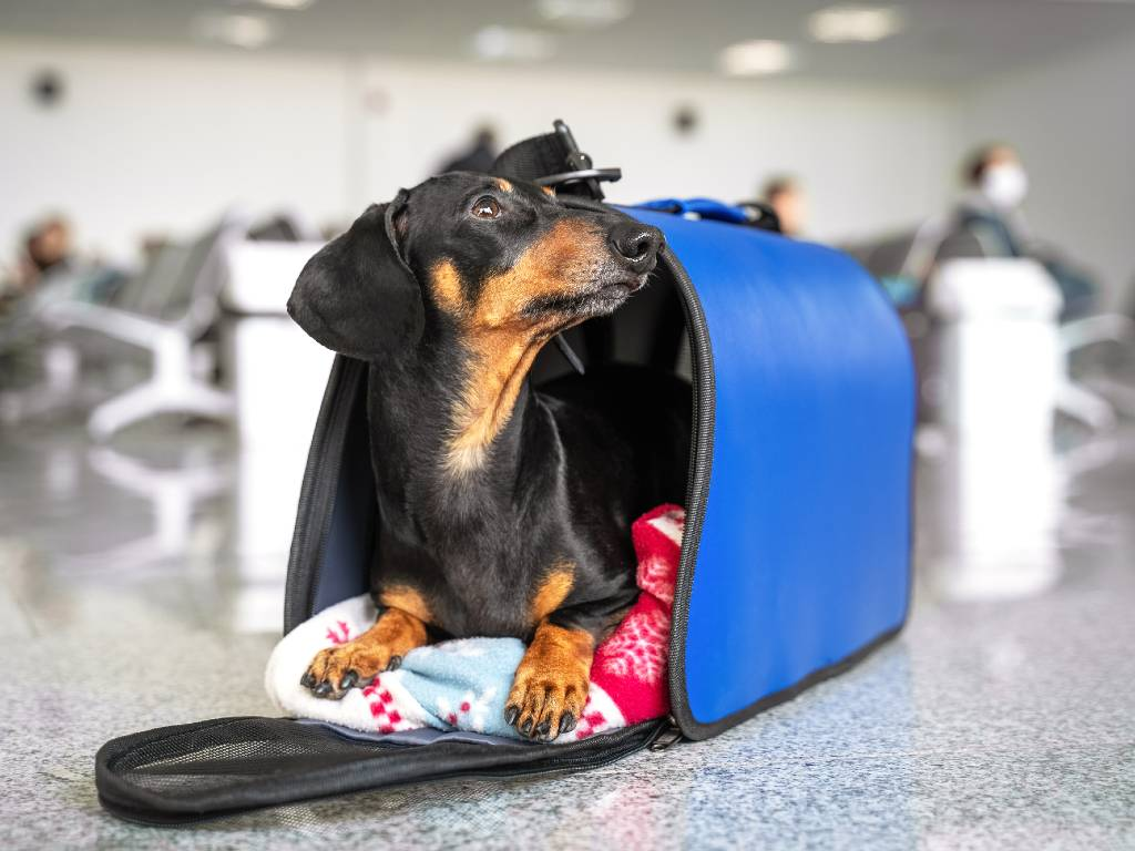 small dog in carrier at the airport