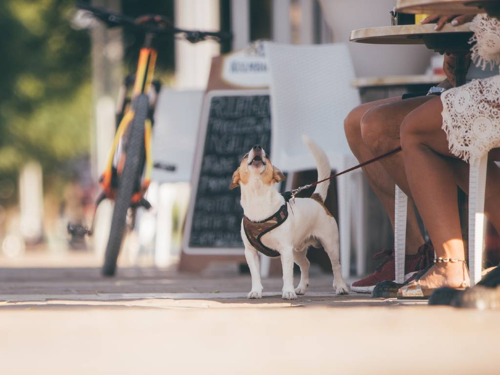 dog on leash with owner sitting at cafe.