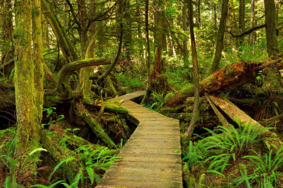 West Coast Trail, Vancouver Island.