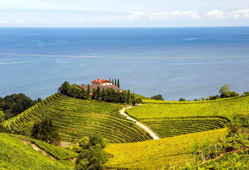 vineyard view in Basque Country.