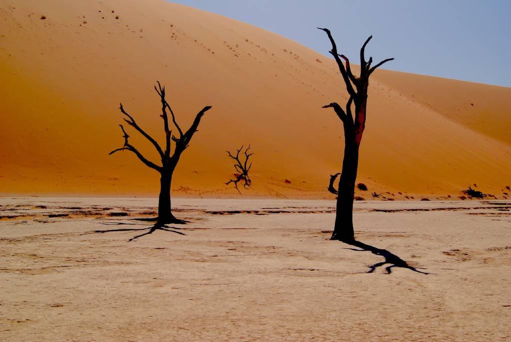 trees in the Namib desert.