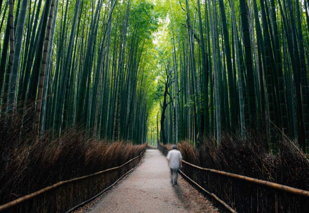 bamboo forest in Kyoto.