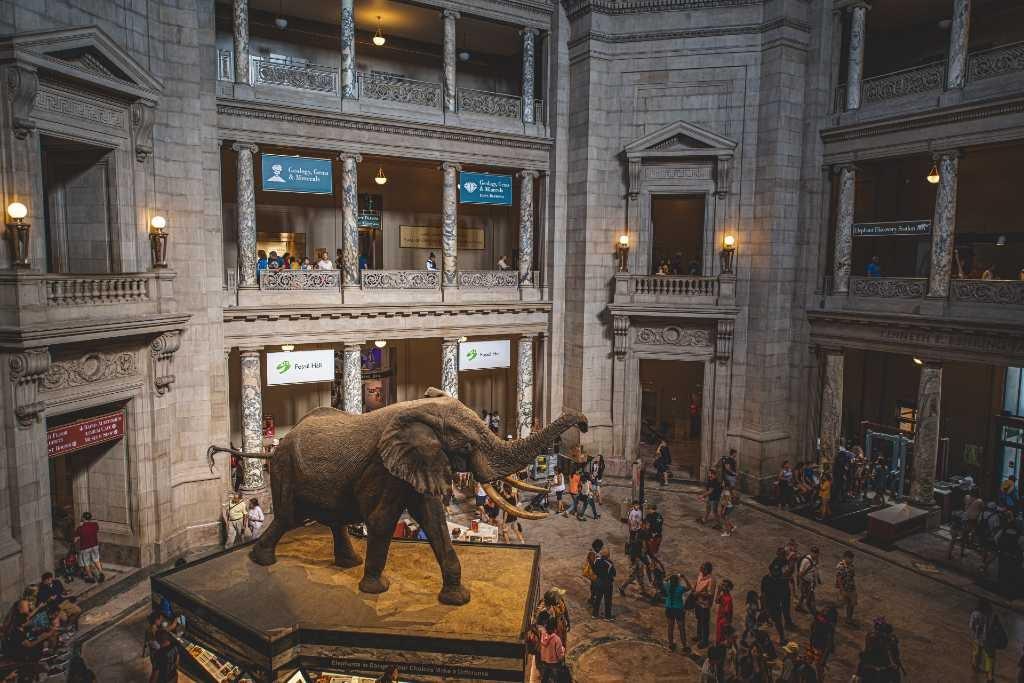 DC Museum.