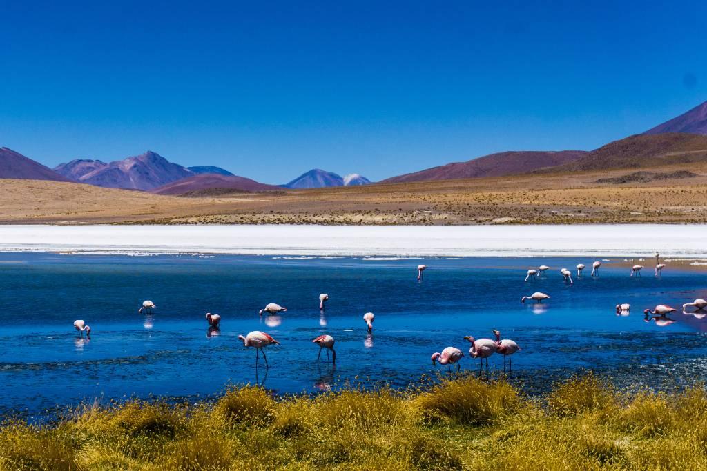 flamingoes around a lake in Bolivia.