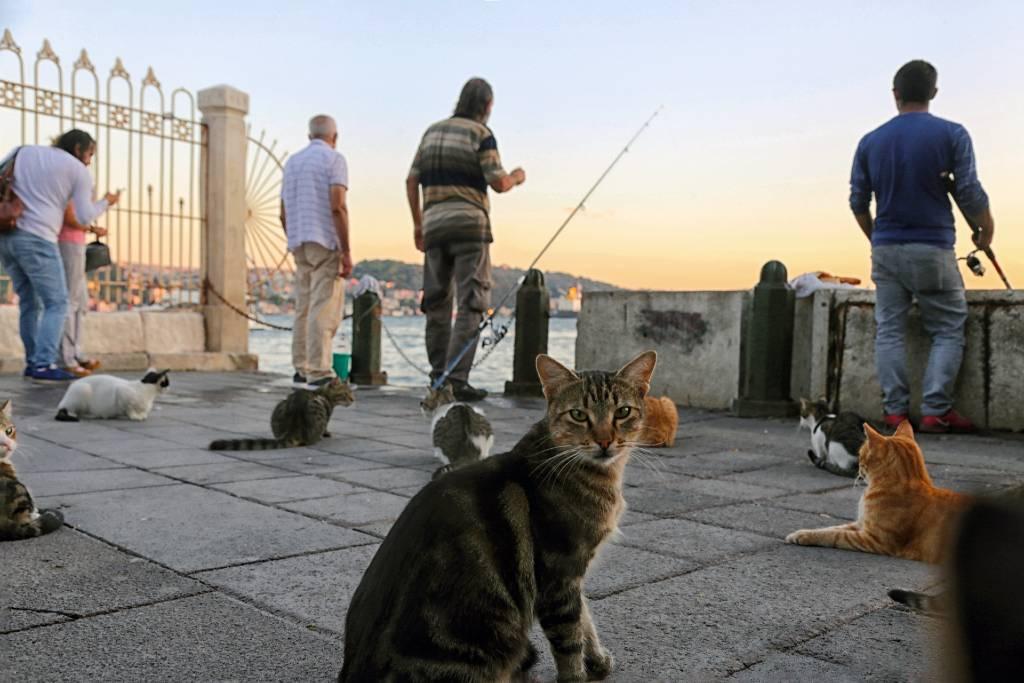 cats gathered around fisherman in Istanbul.