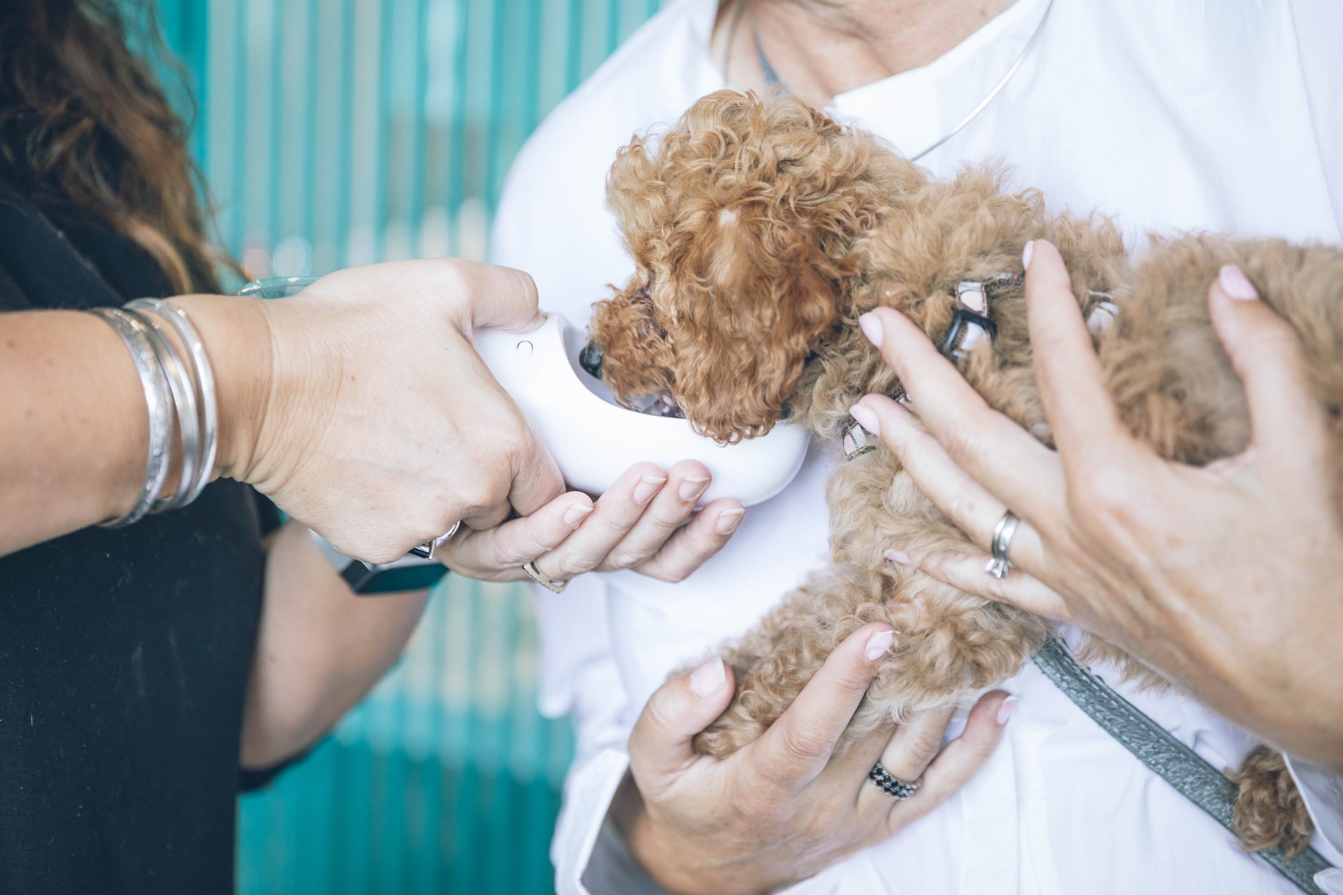 The Top 10 Online Payment & Billing Solutions for Veterinary & Pet Services