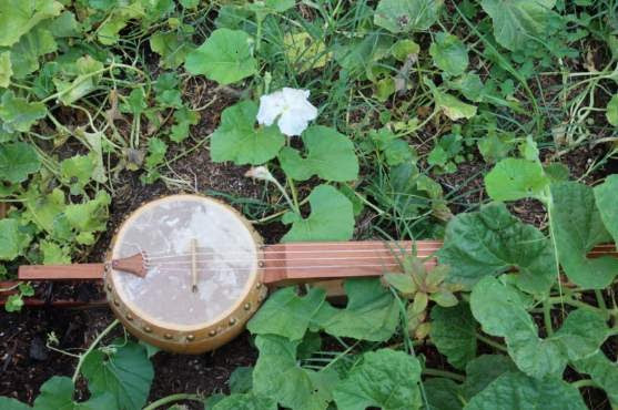 handmade banjo sitting in grass and greenery