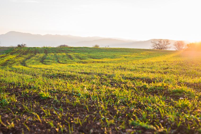 Rural Roundup