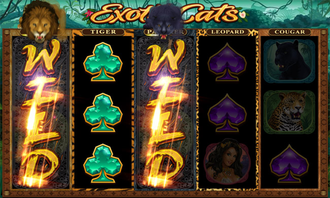 Exotic Cats slot Microgaming