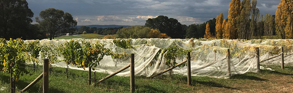 持続可能でスローなワイン醸造