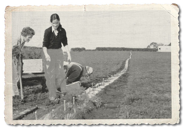 Family owned, so we stand with pride behind our orchards, Dunstans archive photo planting a kiwifruit orchard