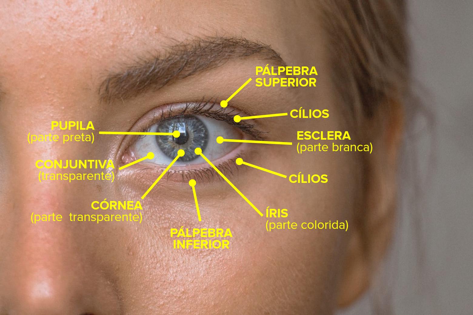 partes externas do olho (iris, pupila, cornea, esclera, pálpebra, cílios, conjuntiva)
