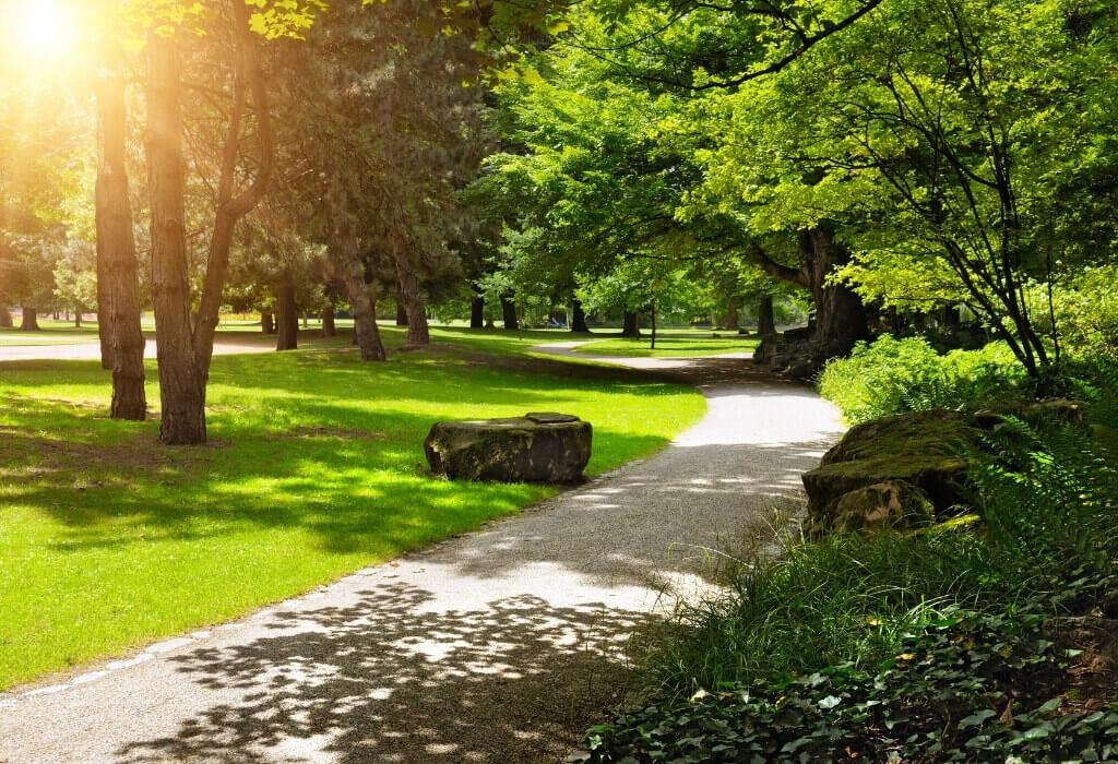 park with sunshine