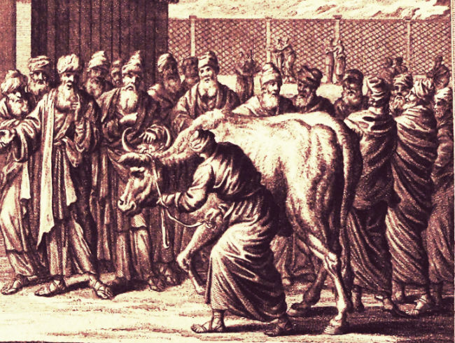 The Rites of the Red Heifer