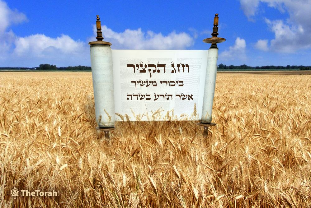 Shavuot: How the Festival of Harvest Grew