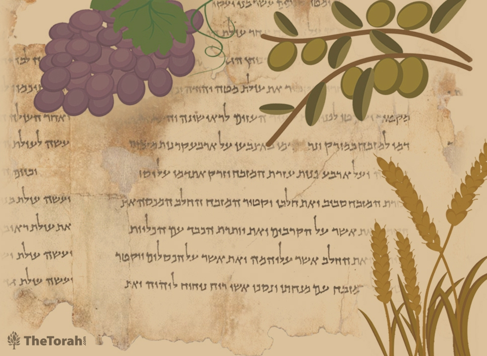 How the Temple Scroll Rewrote the Festival of Bikkurim