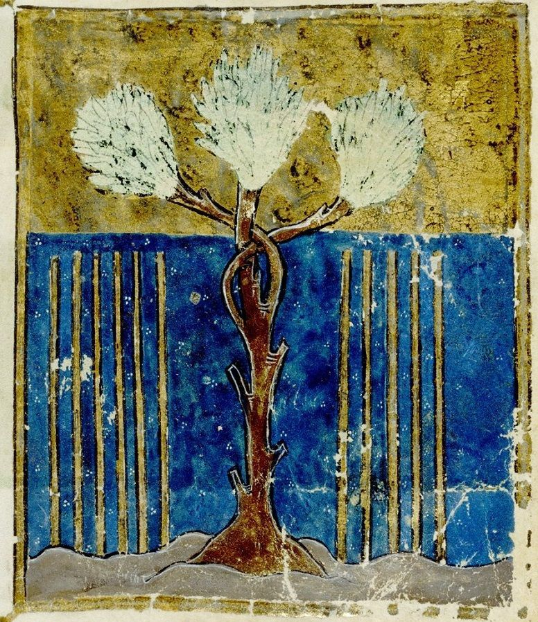 Aaron's Flowering Staff: A Priestly Asherah?