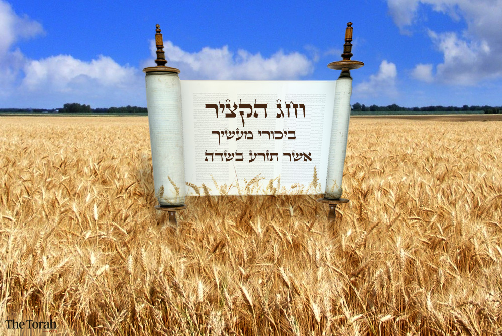 Shavuot: How the Festival of Harvest Grew
