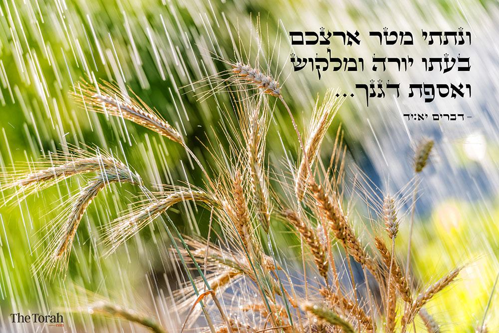 God's Promise: Rain, Grain, and Grass