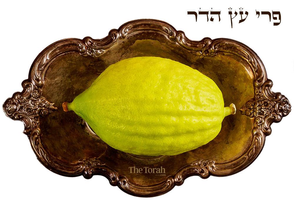 The Etrog: Celebrating Sukkot With a Persian Apple