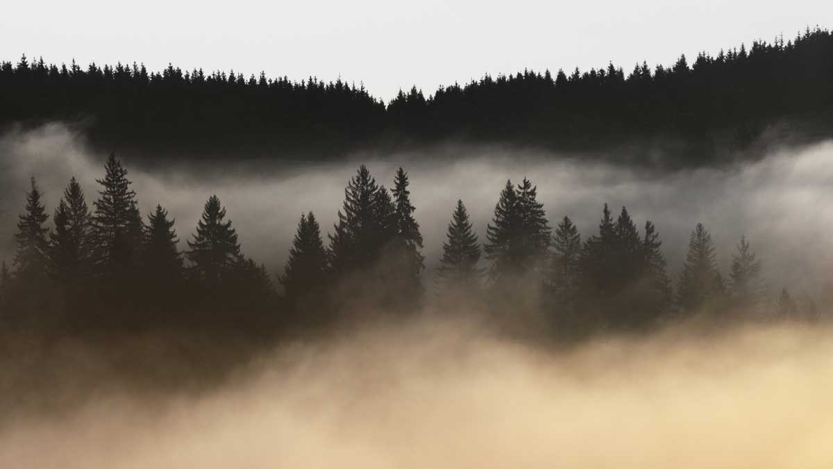 Chronic Brain Fog: Symptoms, Causes, and Treatment