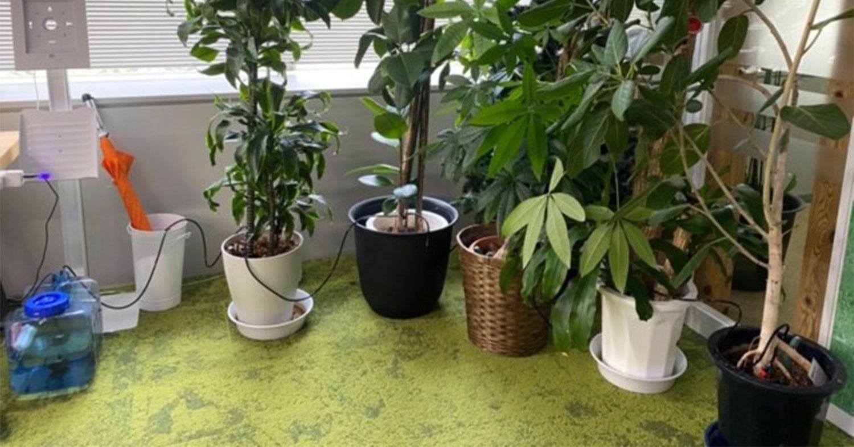 <Gravioユースケース>テレワークあるある―オフィスの観葉植物の水やり、どうしていますか?―IoTを活用した「カシコイ自動灌水システム」をリーズナブルかつ最小限のシェルスクリプトを用いてGravioで実現しませんか?
