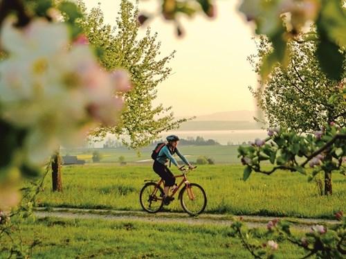 Biking Bodensee