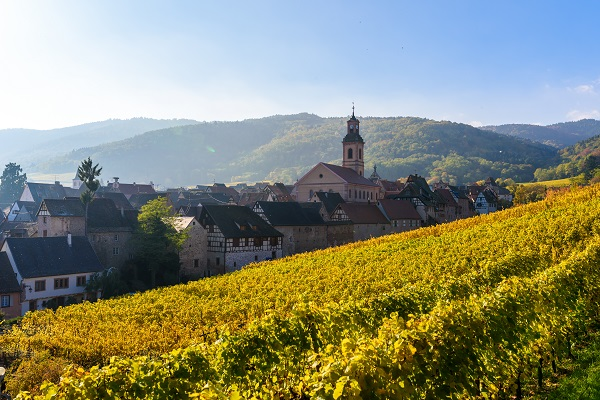 Alsace Vineyard