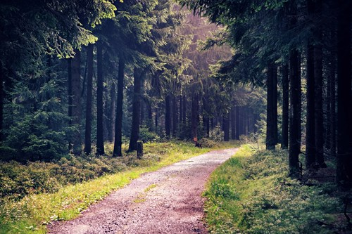 Thuringian Forest National Park