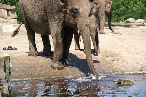 Berlin Zoo Elephant