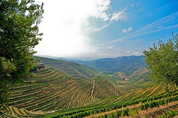 Pinhao Vineyards