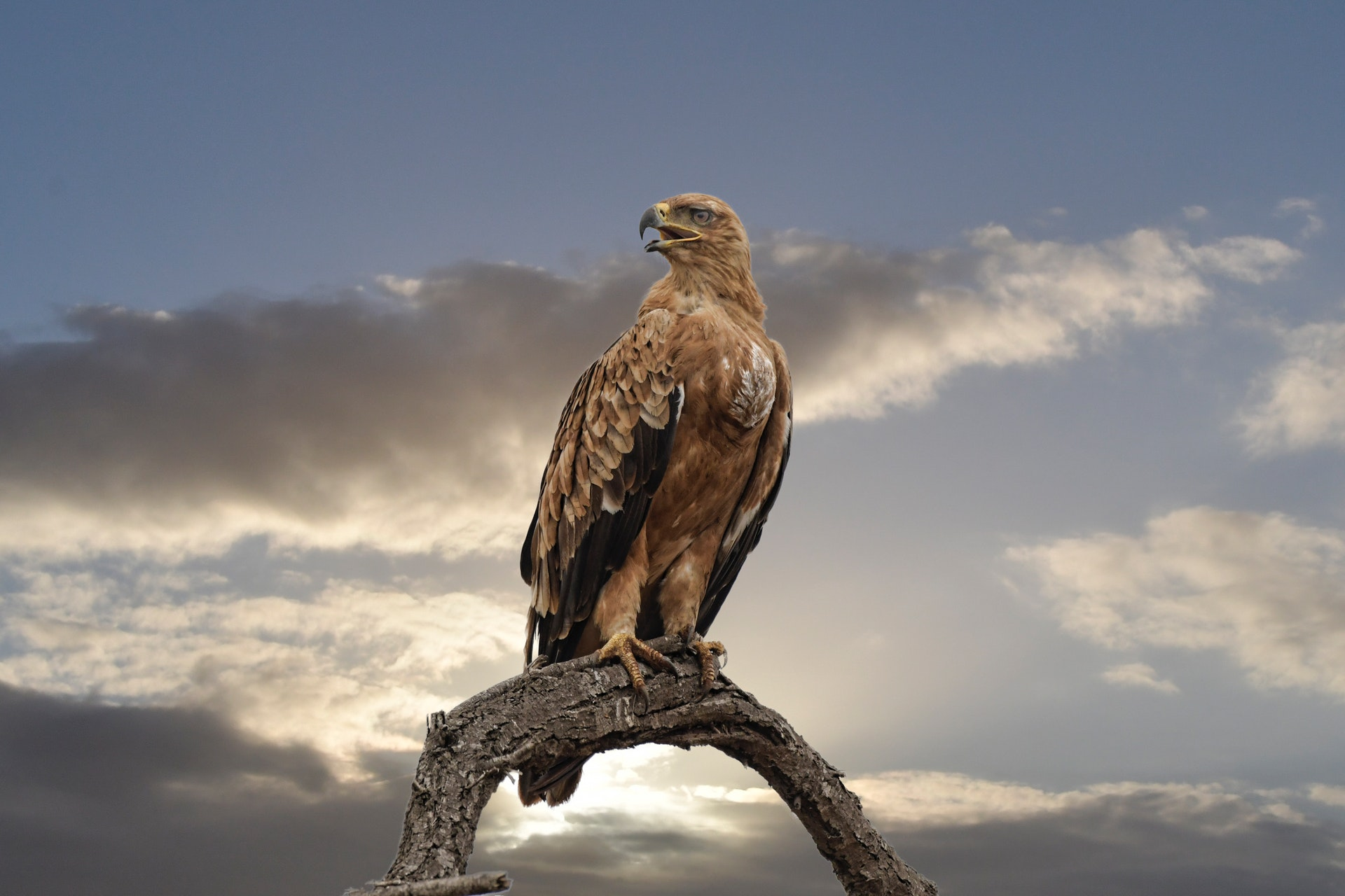Falcon perched on tree