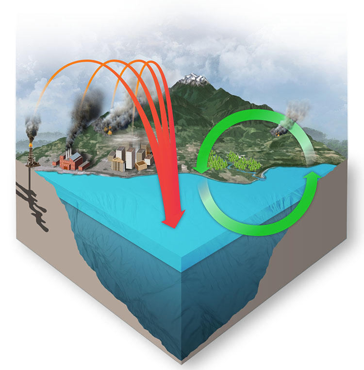 ocean carbon cycle illustration NOAA
