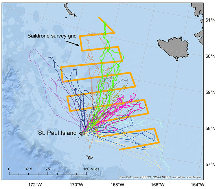 Foraging Seal tracks Saildrone