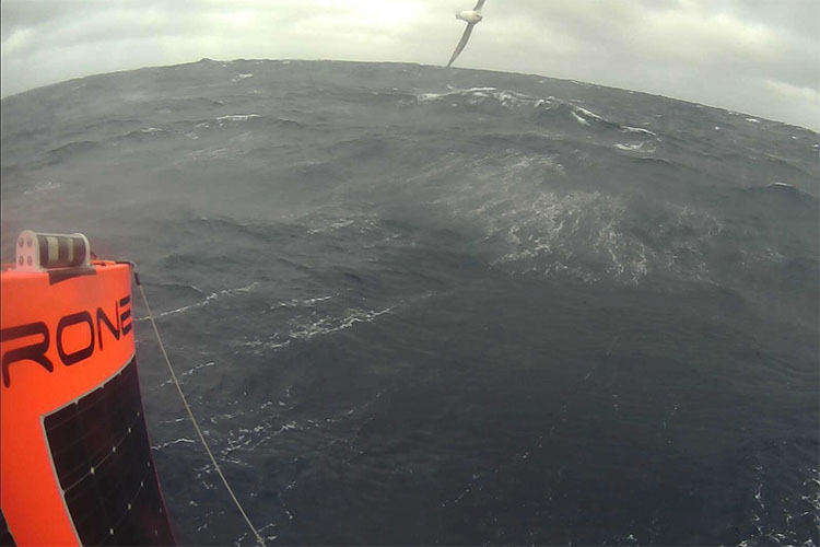 Saildrone onboard camera albatross