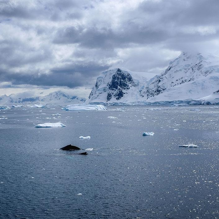 Bring Antarctica to Your (Home) School