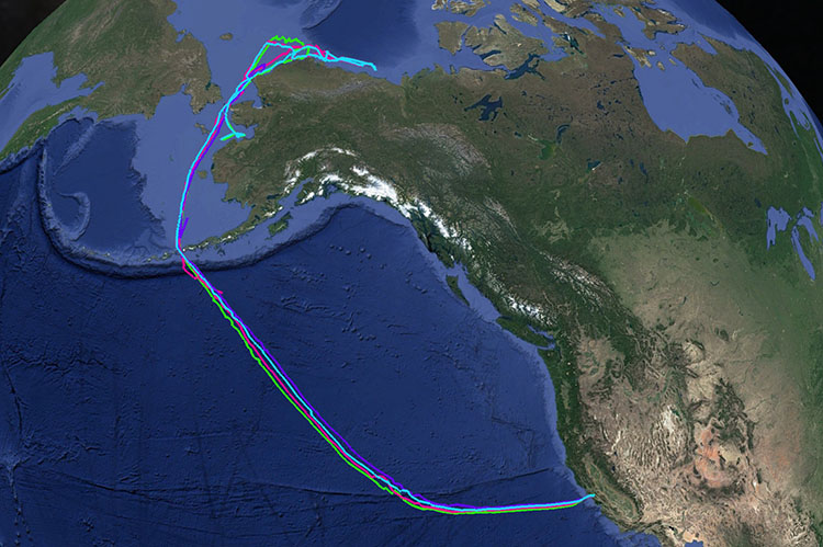 Saildrone mission track San Francisco to Canadian border